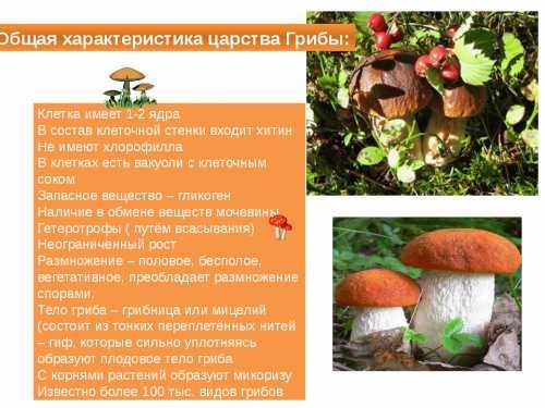 Самые полезные  грибы: описание состава разных