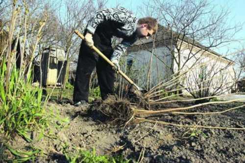 Работы на садовом участке в феврале