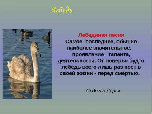Лебединые песни
