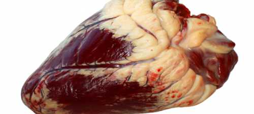 Польза говяжьего сердца, возможный вред, кому