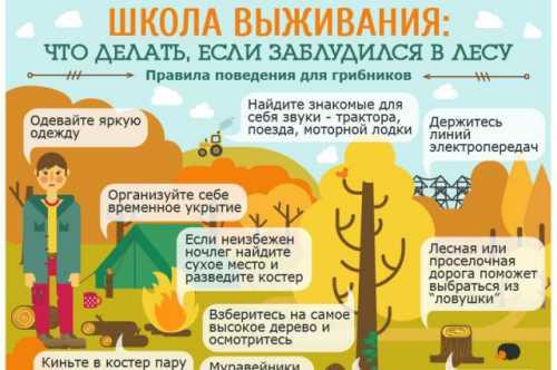 Как не заблудиться в лесу, и что делать если это произошло